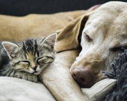 Pets-Wellness