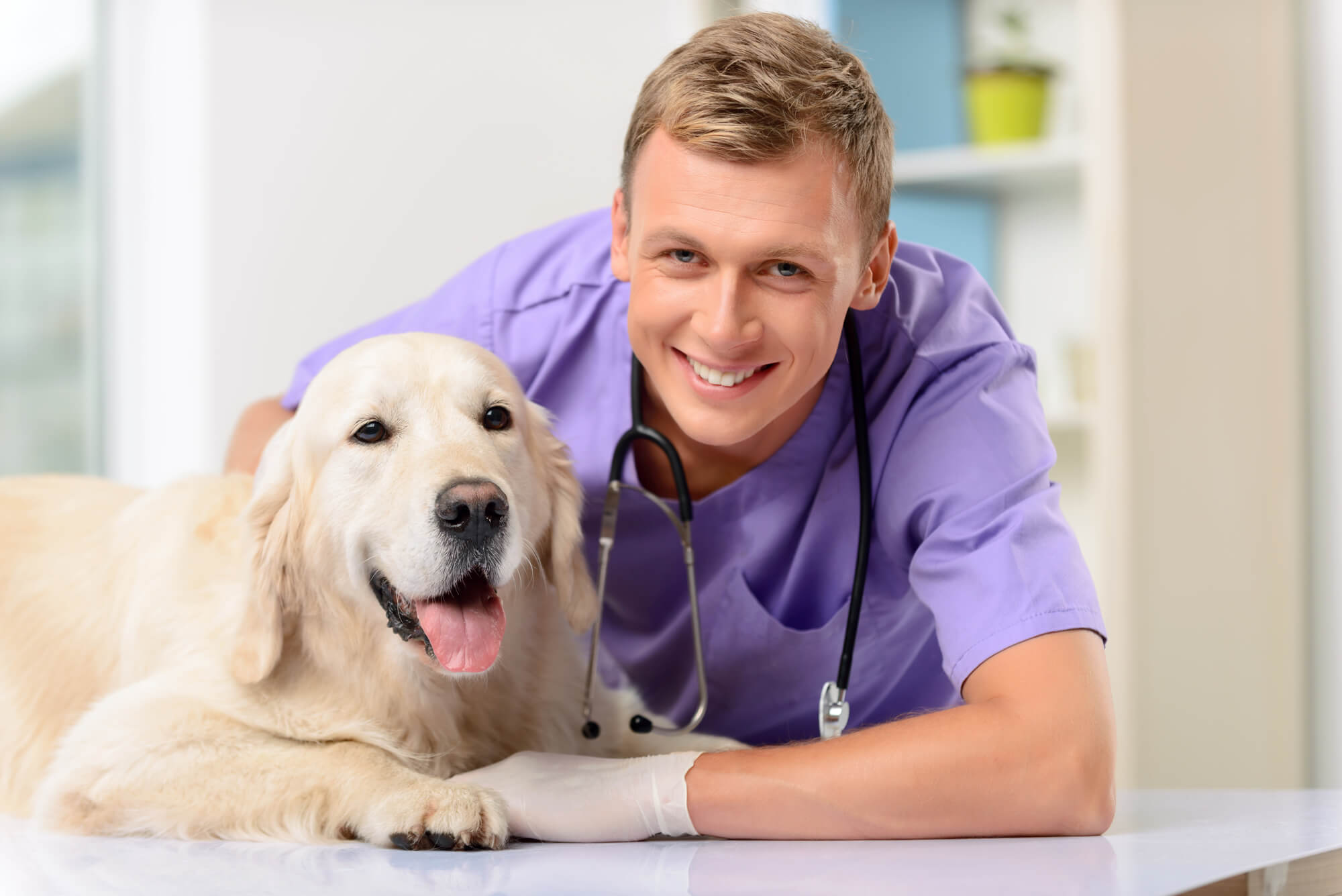 Veterinary-Doctor