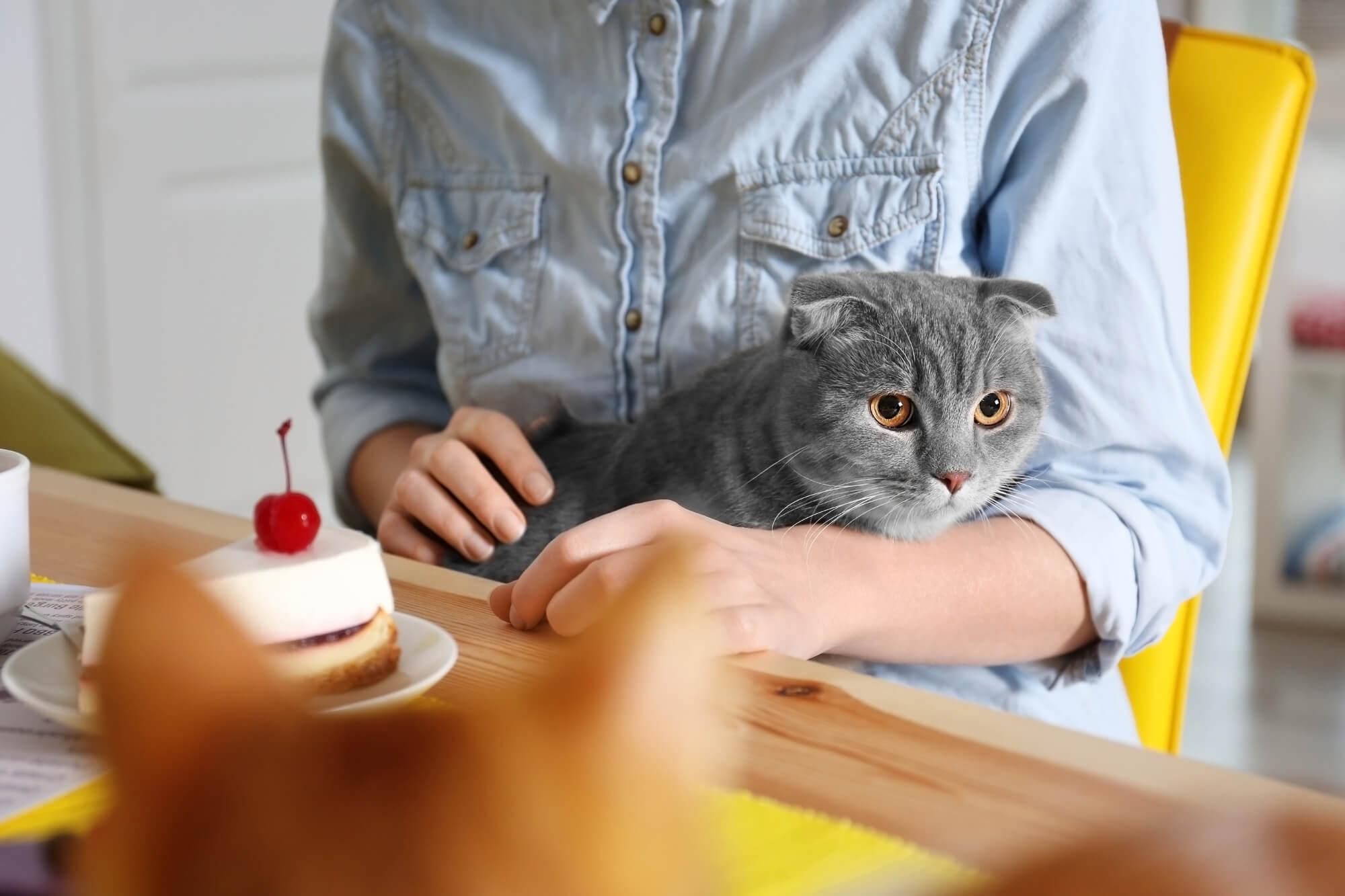 Cat-health-care